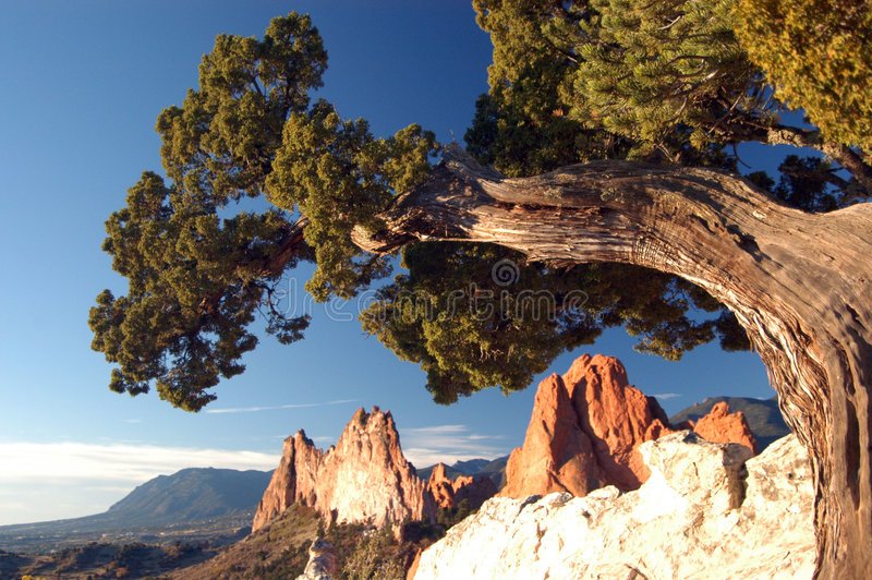 Vieja formación del árbol y de roca imagen de archivo