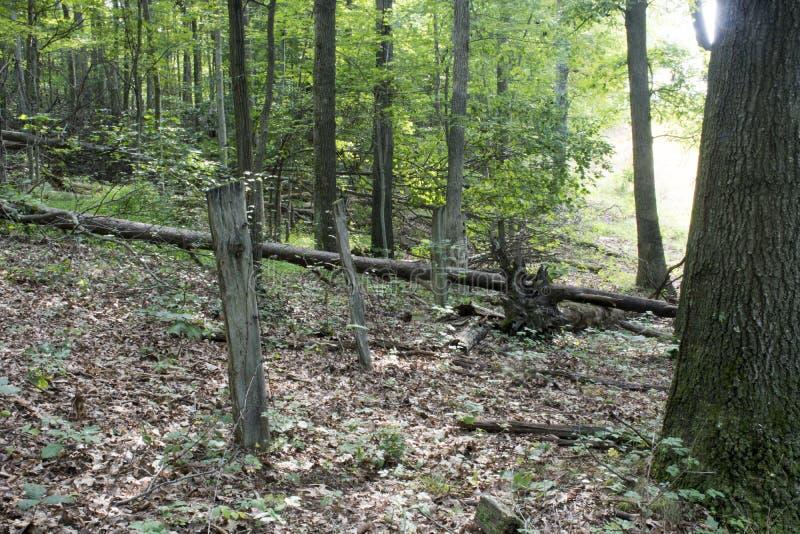Vieja línea de cerca en el bosque imagen de archivo libre de regalías