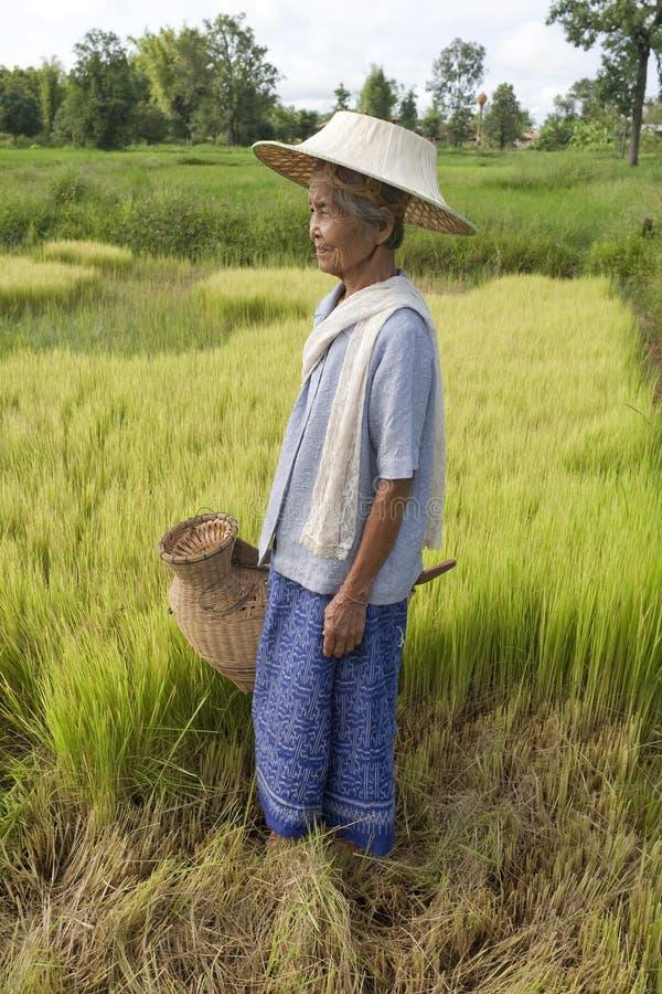 Vieja mujer asiática en el arroz-campo imágenes de archivo libres de regalías