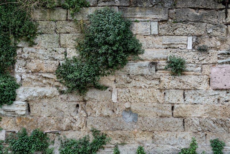 Vieja pared de ladrillos rocosos toscos cultivados con fondo de textura de hierba imagenes de archivo