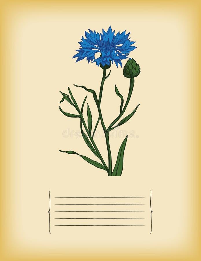 Vieja plantilla de papel con aciano azul. Vector libre illustration