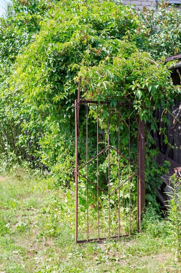 Vieja puerta de jardín oxidada del hierro con los arbustos verdes fotografía de archivo