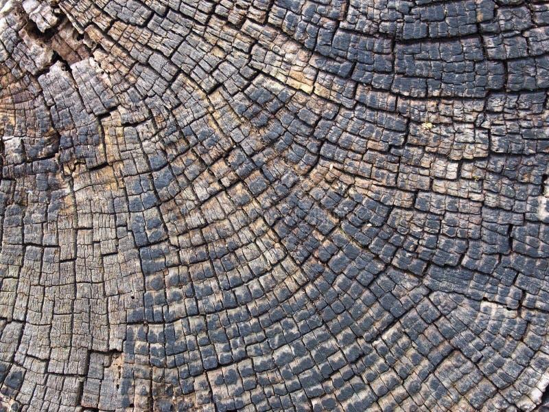 vieja superficie agrietada de la madera con los anillos y las líneas de árbol en un modelo concéntrico geométrico imagenes de archivo