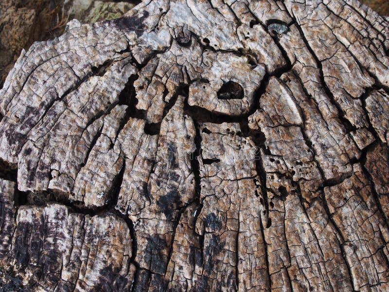 vieja superficie de decaimiento agrietada de la madera con los anillos y las líneas de árbol en un modelo concéntrico geométrico fotografía de archivo libre de regalías