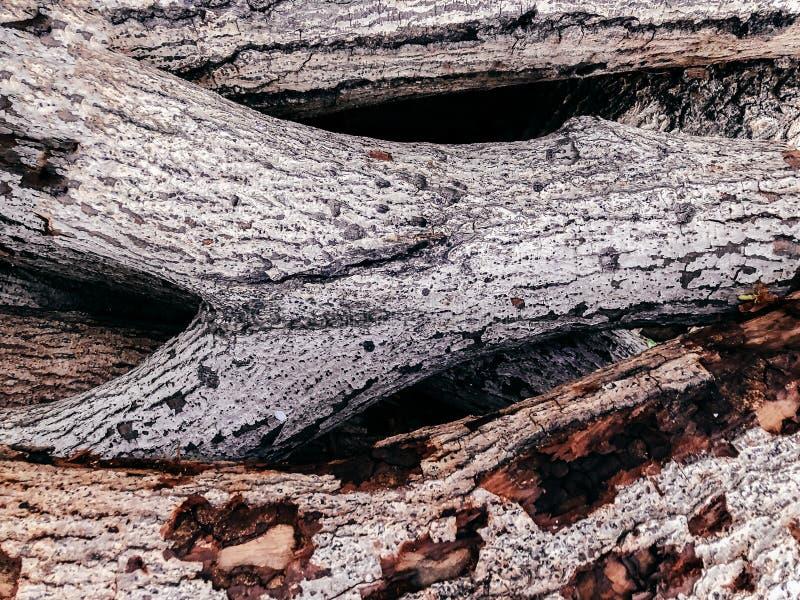 Vieja superficie de madera blanca de la textura del registro foto de archivo libre de regalías
