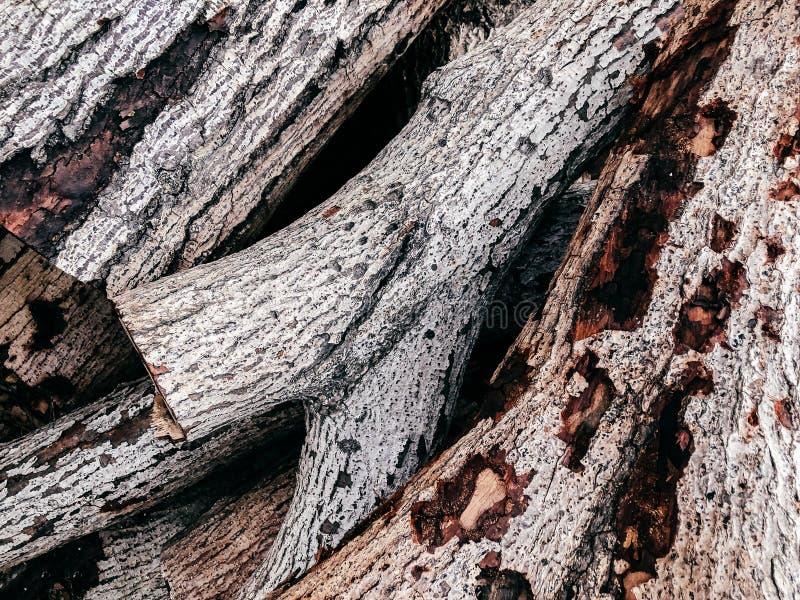 Vieja superficie de madera blanca de la textura del registro imagenes de archivo