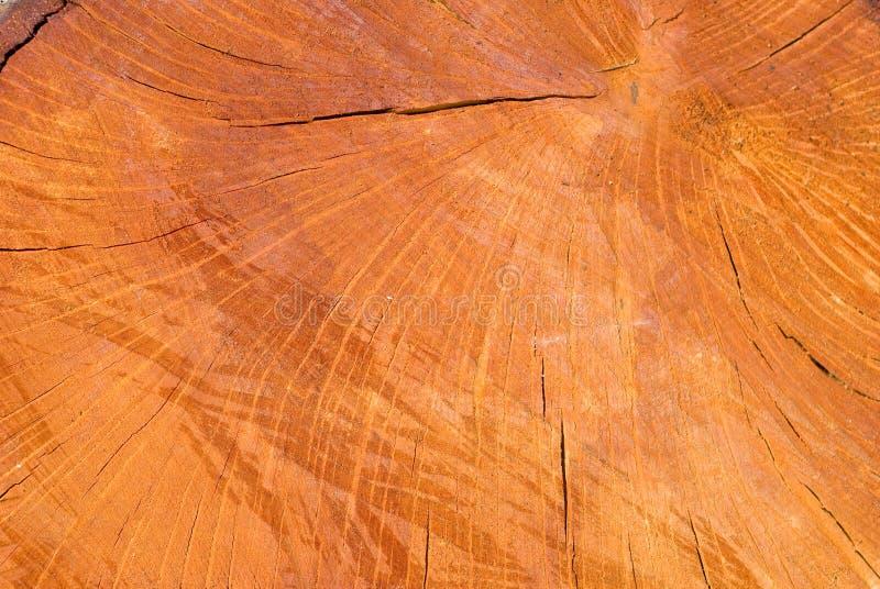 Vieja superficie de madera del corte del roble de la encina Tonos calientes detallados del marr?n oscuro y de la naranja de un tr imagen de archivo