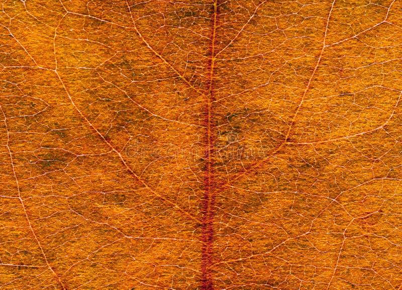 Vieja textura de la hoja imagenes de archivo