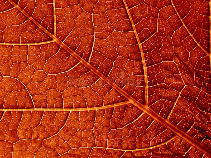 Vieja textura de la hoja imágenes de archivo libres de regalías
