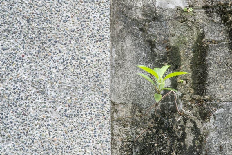vieja textura de la pared del cemento con la planta verde, foto de archivo