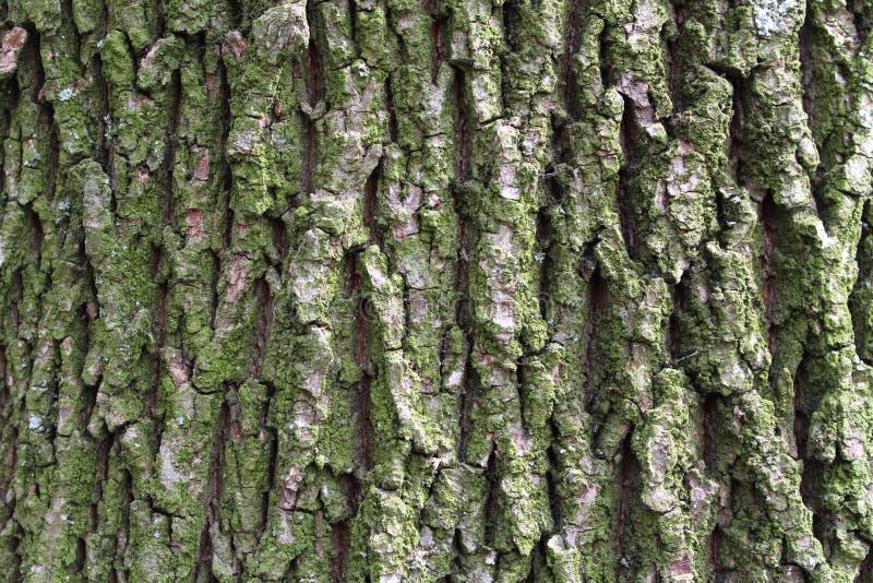 Vieja textura de madera áspera Fondo de madera de la textura Fondo de la textura del árbol Textura del árbol de la grieta Vieja t foto de archivo