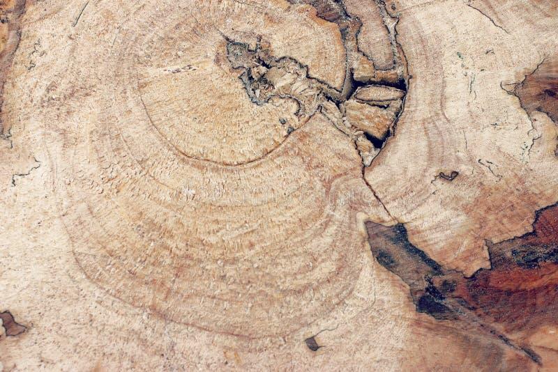 Vieja textura de madera agrietada imágenes de archivo libres de regalías