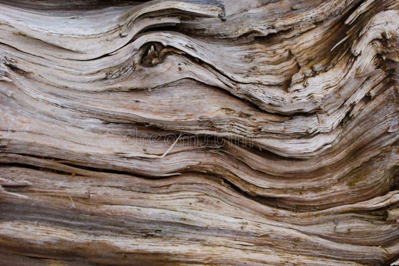 Vieja textura de madera blanca con las grietas pesadas fotografía de archivo
