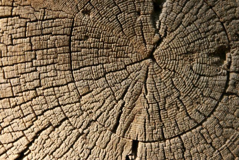 Vieja textura de madera del primer foto de archivo