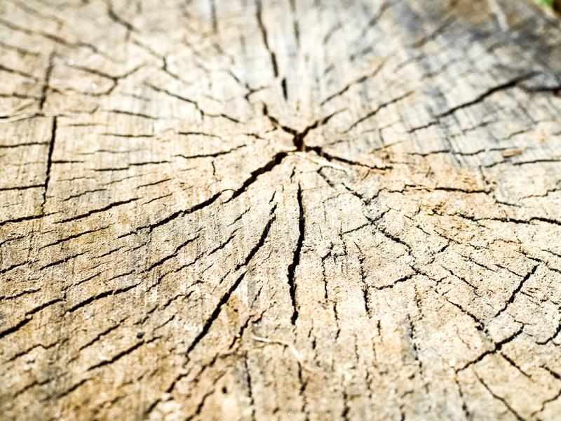 Vieja textura de madera del toc?n de ?rbol fotografía de archivo