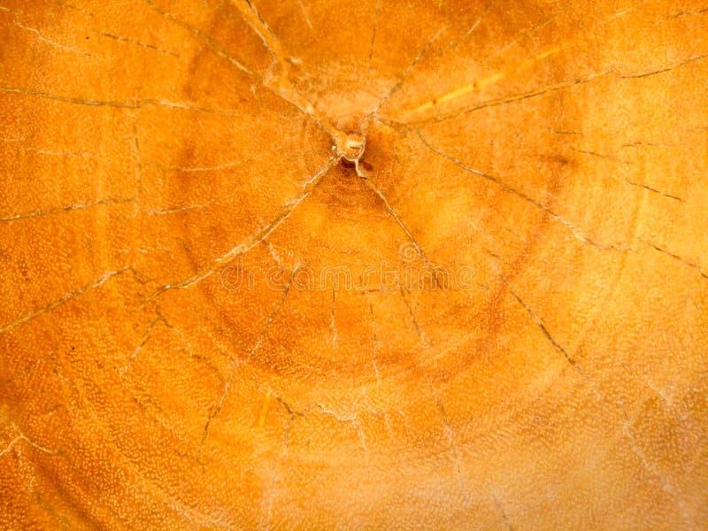 Vieja textura de madera de la naturaleza, modelo de la base fotos de archivo