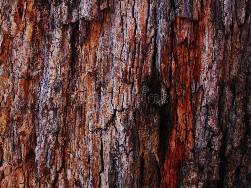 Vieja textura del árbol imagen de archivo libre de regalías