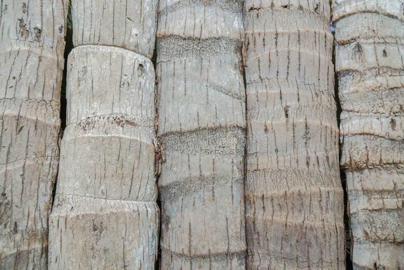 Vieja textura del tronco del coco en modelo vertical foto de archivo