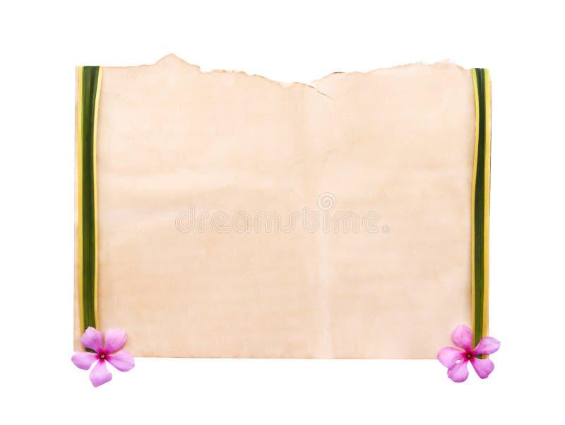 Vieja textura marrón en blanco del papel del grunge y hojas verdes con los bordes amarillos, modelos rosados coloridos aislados e fotos de archivo libres de regalías