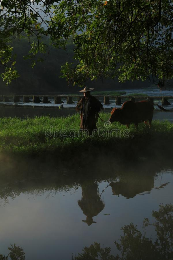 Vieja ventaja del granjero el ganado debajo del baniano antiguo imágenes de archivo libres de regalías