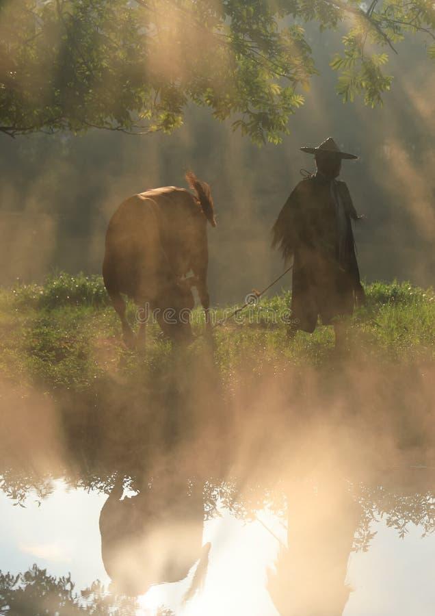 Vieja ventaja del granjero el ganado debajo del baniano antiguo fotografía de archivo libre de regalías