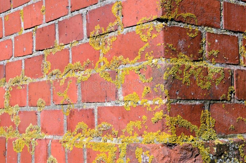 Viejo contexto rojo cubierto de musgo de la esquina de la pared de ladrillo imagen de archivo libre de regalías
