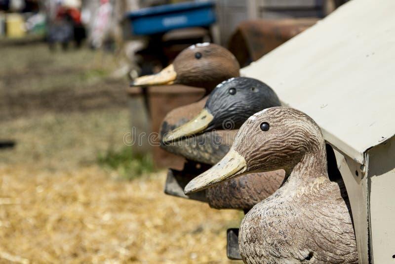 Viejo Duck Decoys para cazar fotografía de archivo libre de regalías