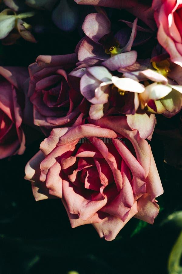 Viejo fondo color de rosa imagen de archivo libre de regalías