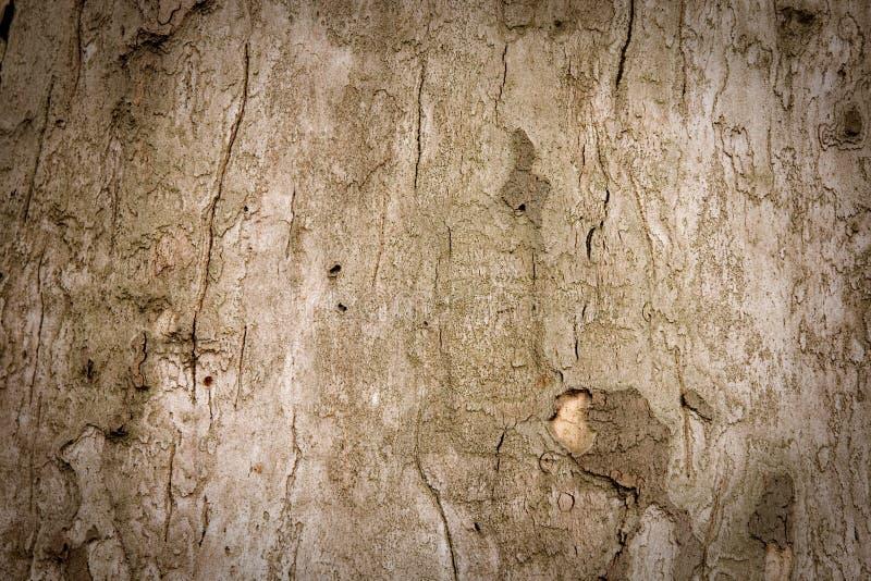 Viejo fondo de la corteza de árbol imagen de archivo libre de regalías