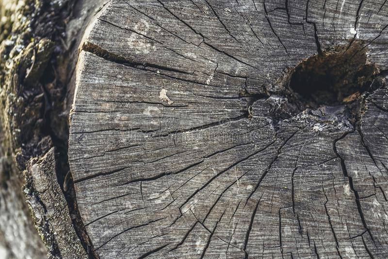 Viejo fondo de la textura del tocón de árbol fotografía de archivo