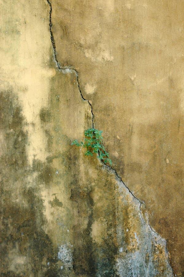 Viejo Fondo De Los Muros De Cemento Del Abstrct Fotografía de archivo