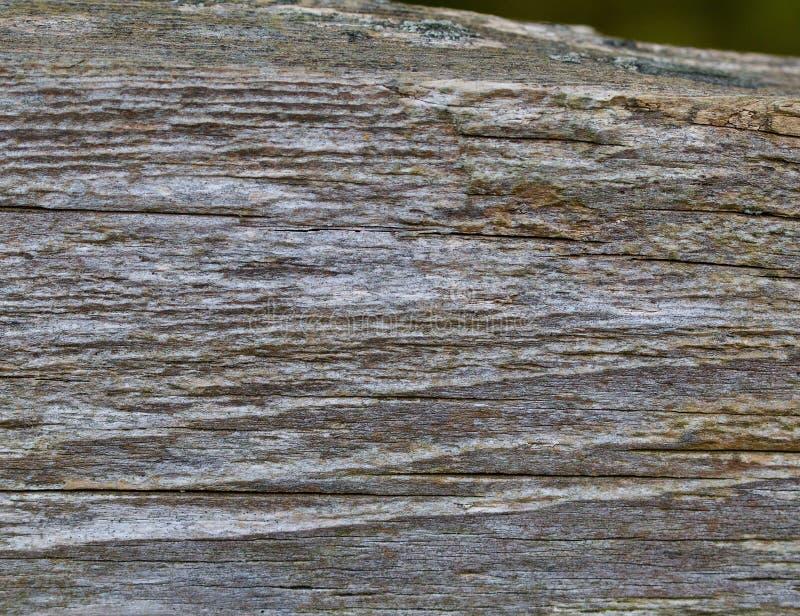 Viejo fondo de madera gris de la cerca fotografía de archivo