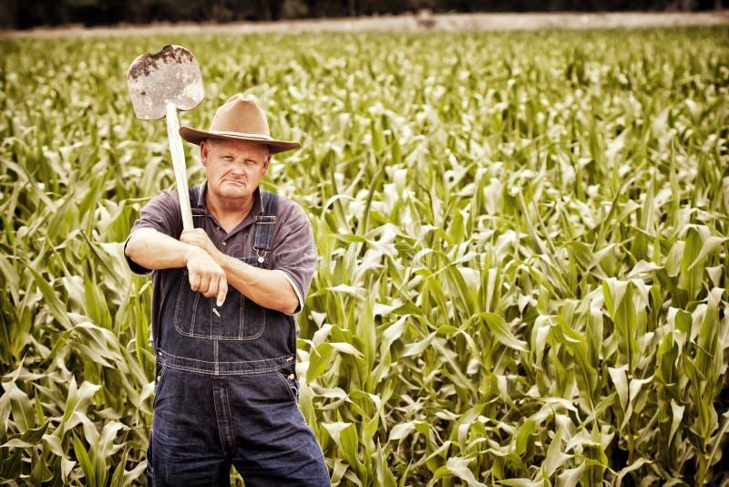 Viejo granjero de la vendimia en los campos de maíz imagen de archivo libre de regalías