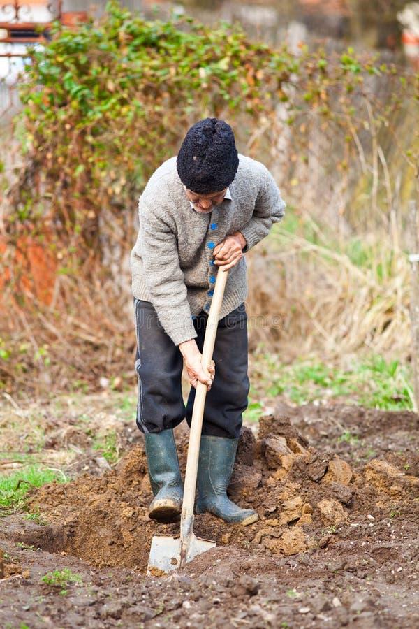 Viejo granjero que cava en el jardín imagen de archivo libre de regalías