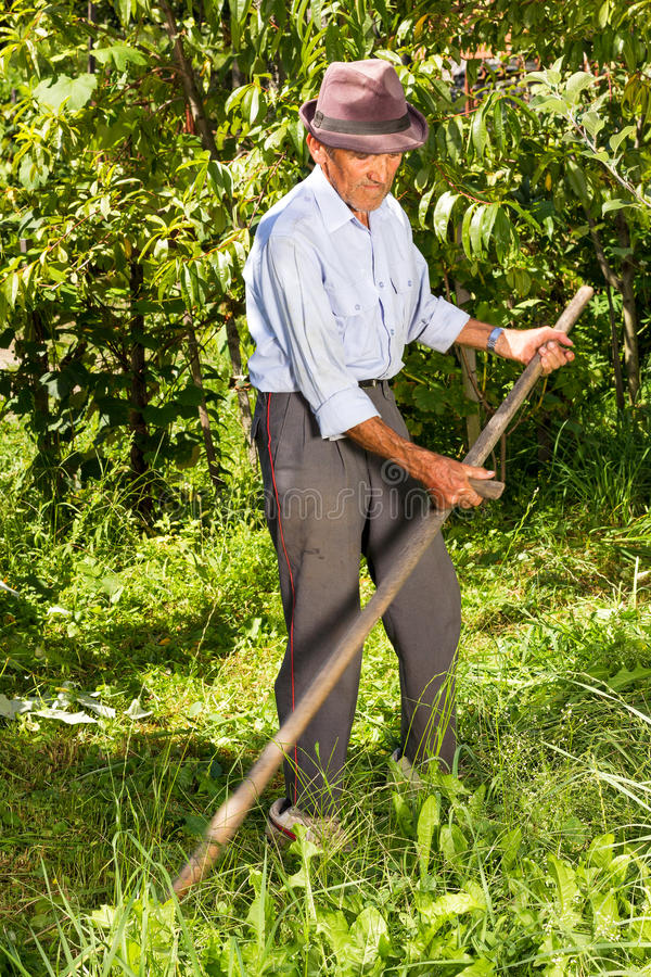 Viejo granjero que usa la guadaña para segar la hierba foto de archivo
