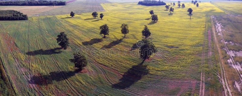 Viejo grupo hermoso de los robles en el panorama del campo, visión aérea fotos de archivo libres de regalías