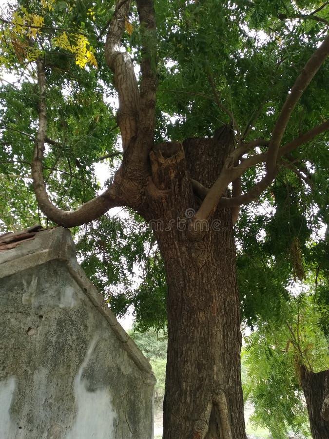 Viejo hogar de la ayuda del árbol foto de archivo