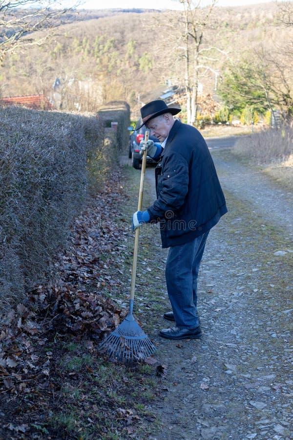 Viejo hombre que rastrilla las hojas caidas en el jardín, el cultivar un huerto del hombre mayor imágenes de archivo libres de regalías
