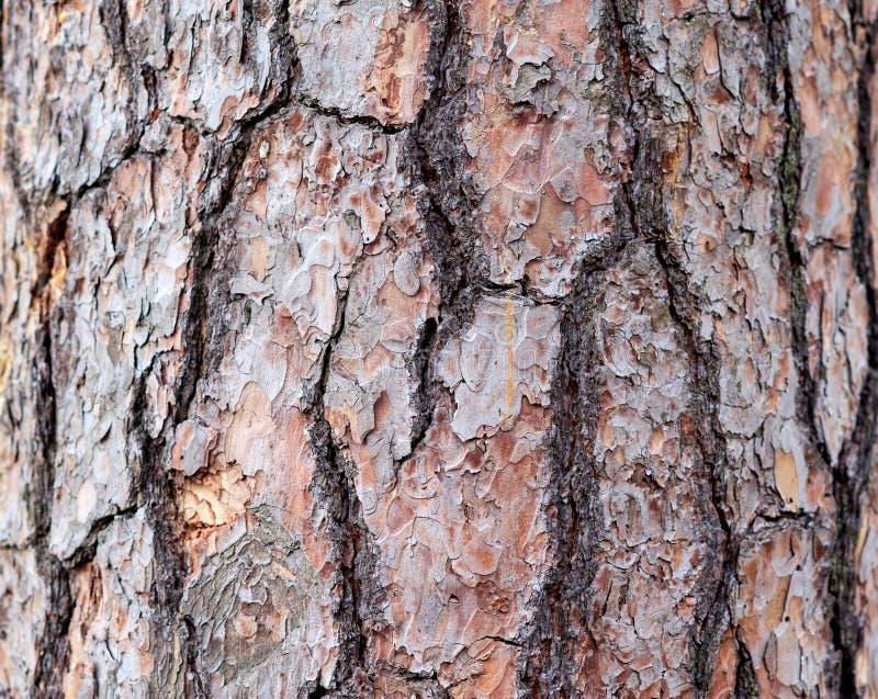 Viejo modelo de madera del fondo de la textura del árbol fotos de archivo libres de regalías
