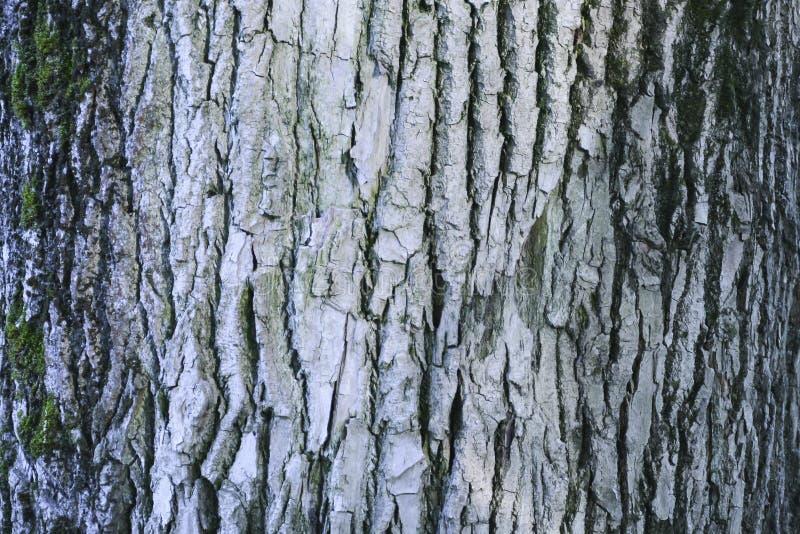 Viejo modelo de madera del fondo de la textura del ?rbol imagen de archivo libre de regalías