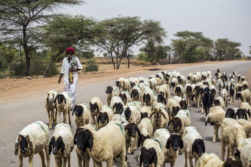 Viejo pastor de Rajasthani fotos de archivo libres de regalías