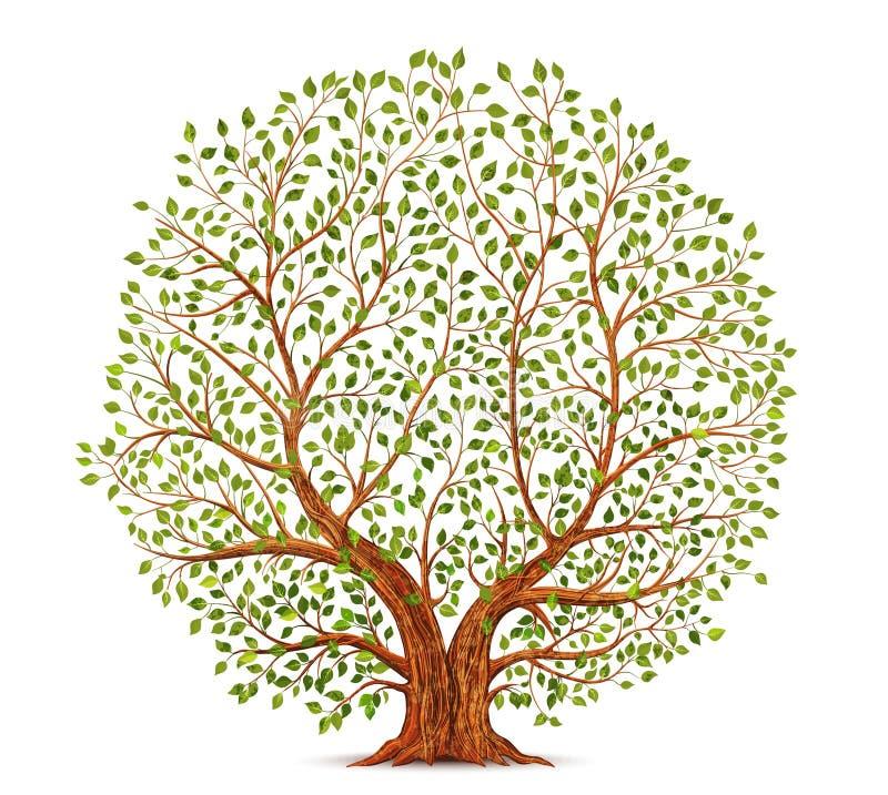 Viejo vector del árbol stock de ilustración