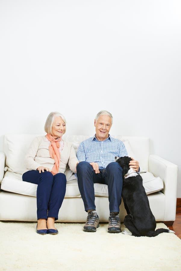 Viejos pares mayores con el perro en casa imagen de archivo