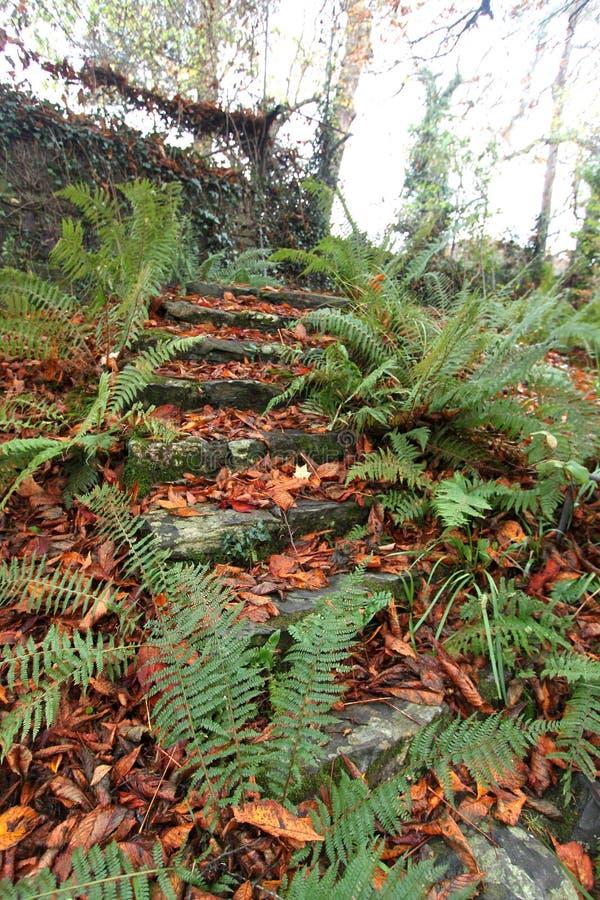 Viejos pasos de piedra, cubiertos con las hojas de otoño Otoño en Wicklow, Irlanda foto de archivo