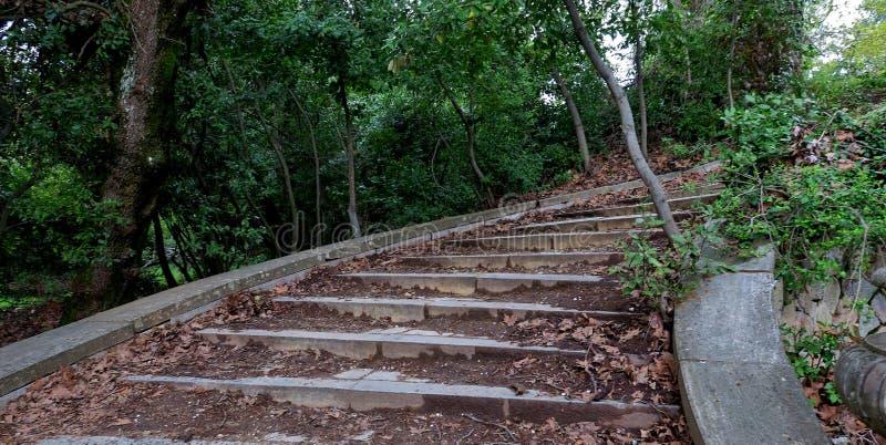 Viejos pasos que llevan en las profundidades del bosque imagenes de archivo