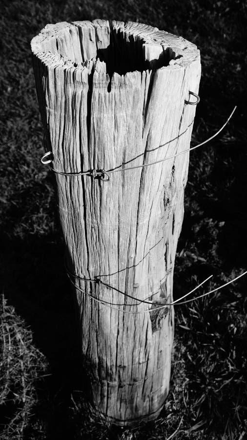 Viejos posts resistidos de la cerca en granja del waikato fotos de archivo libres de regalías