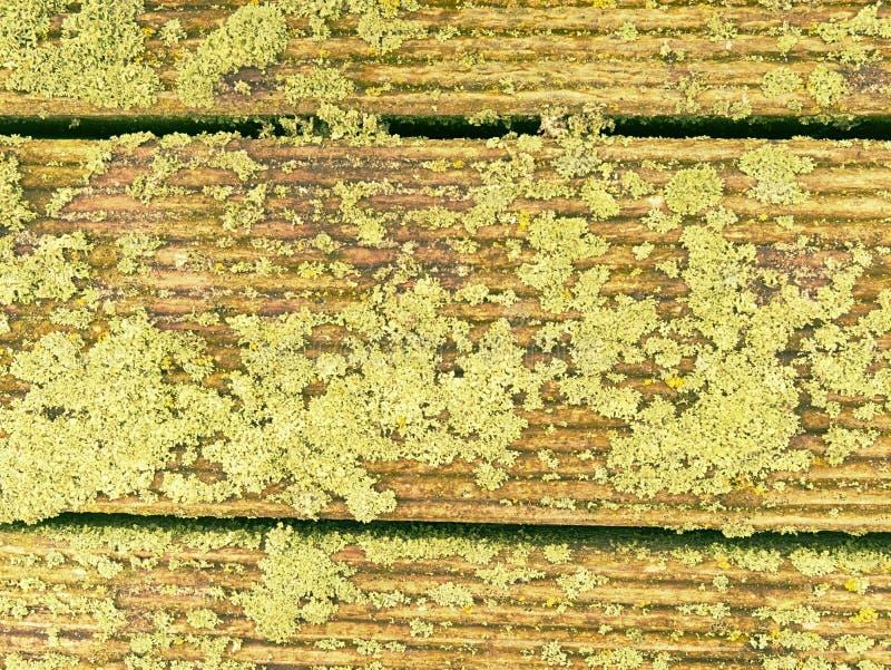 Viejos tableros de madera cubiertos de musgo, terraza exterior fotografía de archivo libre de regalías