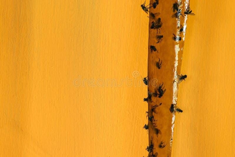 Viel fliegt gefangen auf klebrigem Fliegenfänger im gelben Hintergrund lizenzfreie stockfotografie