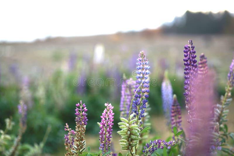 Viel Jahreszeit der Blume im Frühjahr lizenzfreie stockfotografie