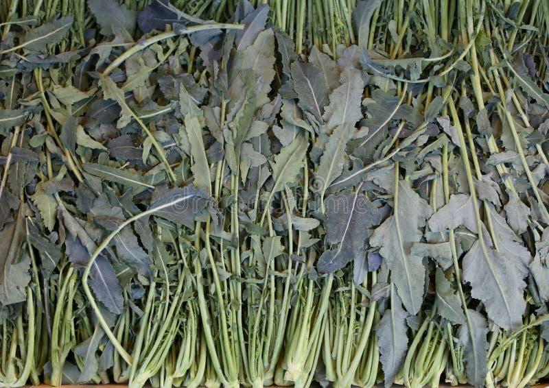 Viel nannte grüner Brassica- Oleraceabrokkoli Broccolo Fiolaro Franc lizenzfreies stockbild